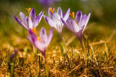 Pour vivre le printemps, nous ne pouvons plus que l'attendre, nous allons devoir l'être.